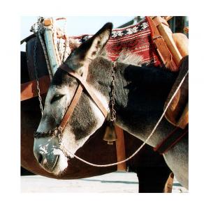 The Mullah's donkey